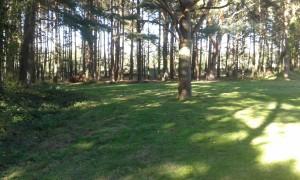 lawnwood